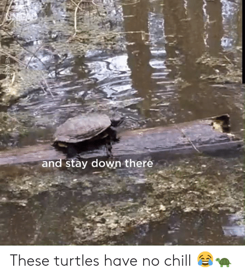 Chill, Dank, and No Chill: and stay down there  NEWSPLARE These turtles have no chill 😂🐢