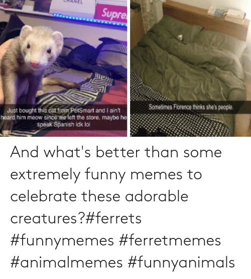 Memes To: And what's better than some extremely funny memes to celebrate these adorable creatures?#ferrets #funnymemes #ferretmemes #animalmemes #funnyanimals