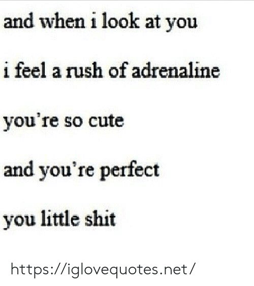 Youre So: and when i look at you  i feel a rush of adrenaline  you're so cute  and you're perfect  you little shit https://iglovequotes.net/
