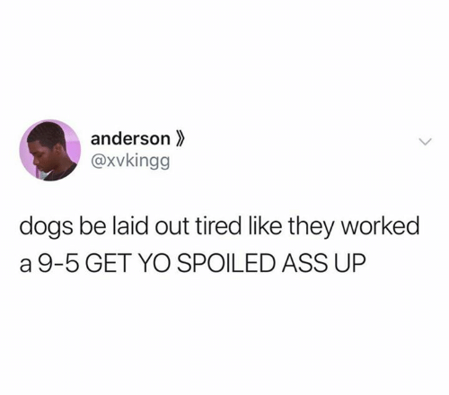 spoiled: anderson  @xvkingg  dogs be laid out tired like they worked  a 9-5 GET YO SPOILED ASS UP