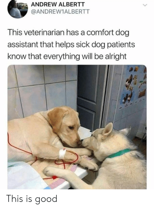 Veterinarian: ANDREW ALBERTT  @ANDREW1ALBERTT  This veterinarian has a comfort dog  assistant that helps sick dog patients  know that everything will be alright This is good