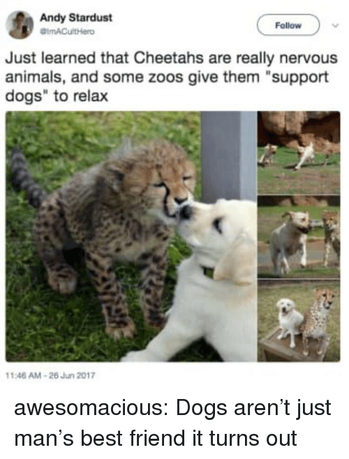 "Animals, Best Friend, and Dogs: Andy Stardust  Follow  Just learned that Cheetahs are really nervous  animals, and some zoos give them ""support  dogs"" to relax  146 AM-26 Jun 2017 awesomacious:  Dogs aren't just man's best friend it turns out"