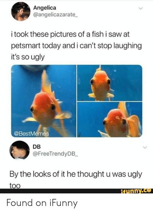 Petsmart: Angelica  @angelicazarate  i took these pictures of a fish i saw at  petsmart today and i can't stop laughing  it's so ugly  @BestMemes  DB  @FreeTrendyDB_  By the looks of it he thought u was ugly  too  ifynny.co Found on iFunny