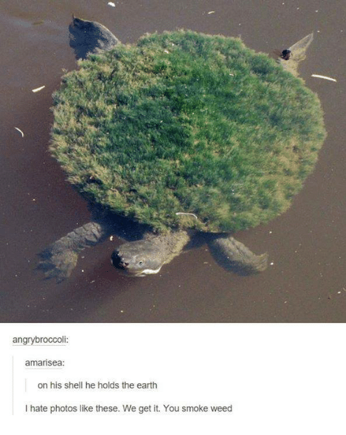 We get it, you vape: angry broccoli:  amarisea:  on his shell he holds the earth  I hate photos like these. We get it. You smoke weed