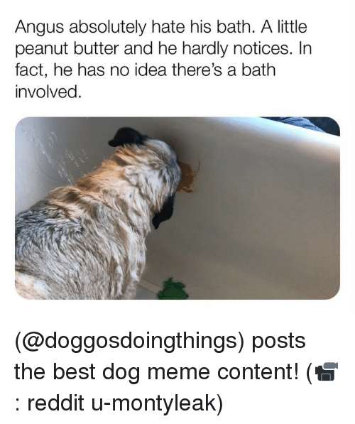 Dog Meme: Angus absolutely hate his bath. A little  peanut butter and he hardly notices. In  fact, he has no idea there's a bath  involved. (@doggosdoingthings) posts the best dog meme content! (📹: reddit u-montyleak)
