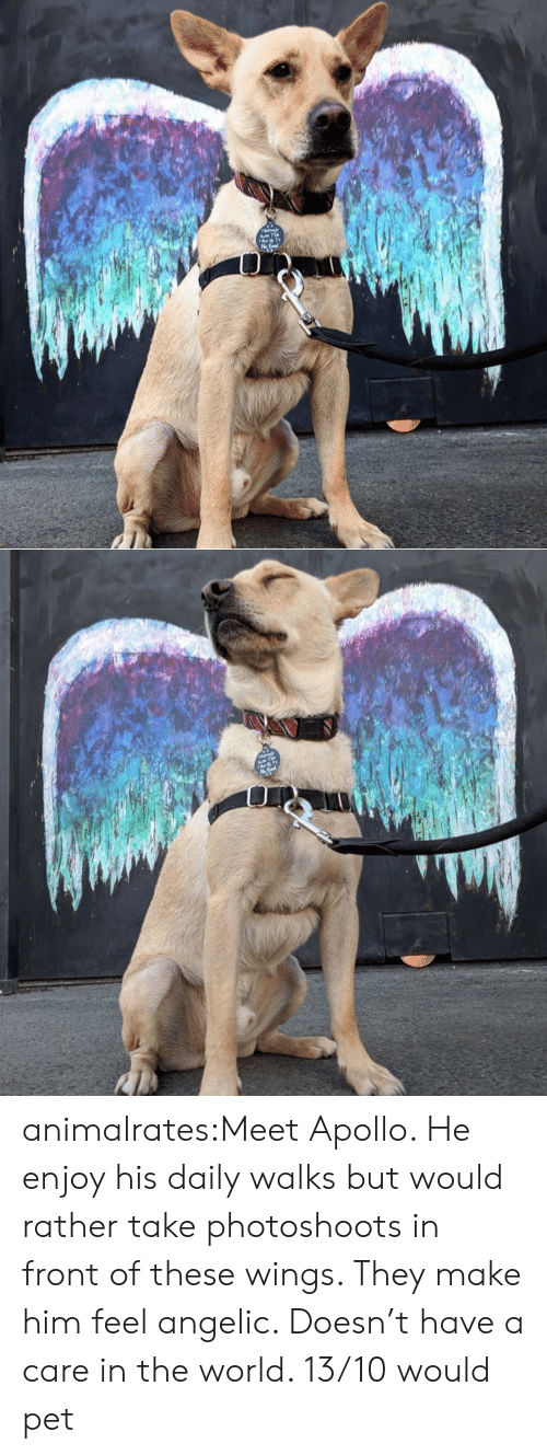 Target, Tumblr, and Apollo: animalrates:Meet Apollo. He enjoy his daily walks but would rather take photoshoots in front of these wings. They make him feel angelic. Doesn't have a care in the world. 13/10 would pet
