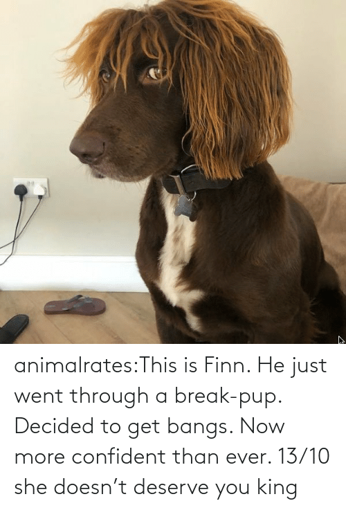 Break: animalrates:This is Finn. He just went through a break-pup. Decided to get bangs. Now more confident than ever. 13/10 she doesn't deserve you king