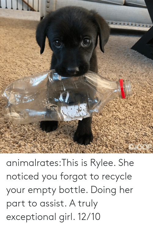her: animalrates:This is Rylee. She noticed you forgot to recycle your empty bottle. Doing her part to assist. A truly exceptional girl. 12/10