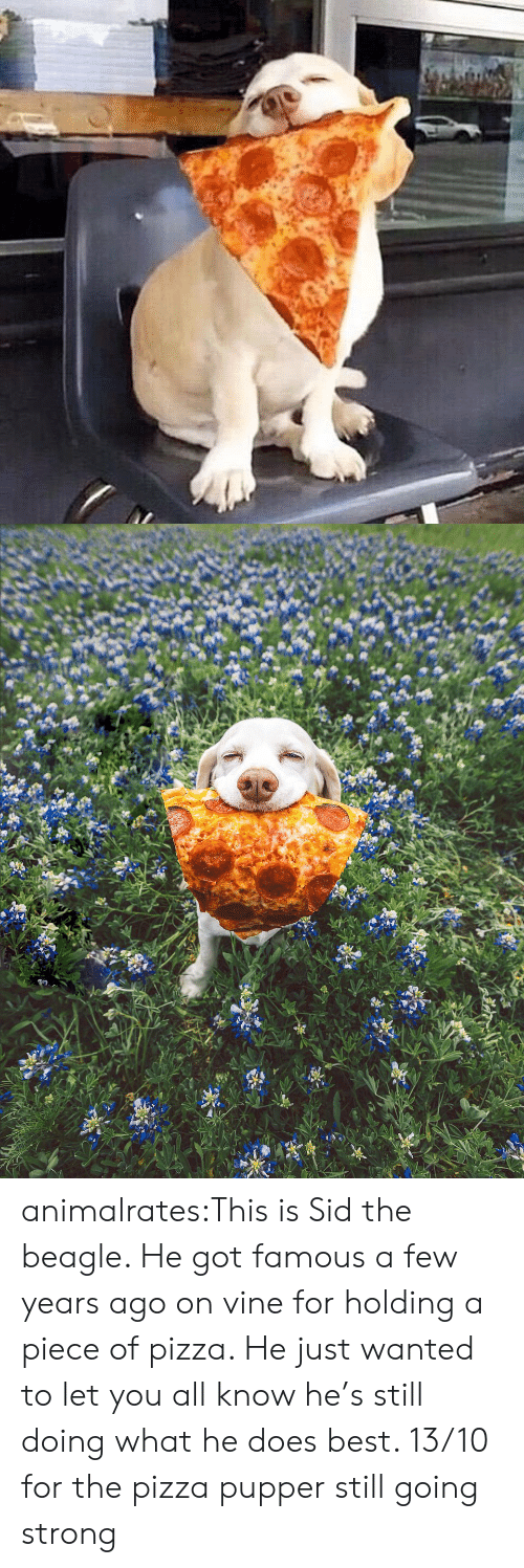 Pizza, Target, and Tumblr: animalrates:This is Sid the beagle. He got famous a few years ago on vine for holding a piece of pizza. He just wanted to let you all know he's still doing what he does best. 13/10 for the pizza pupper still going strong