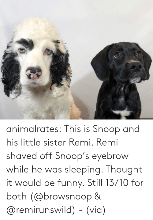 Thought: animalrates:  This is Snoop and his little sister Remi. Remi shaved off Snoop's eyebrow while he was sleeping. Thought it would be funny. Still 13/10 for both‬ (@browsnoop & @remirunswild) - (via)