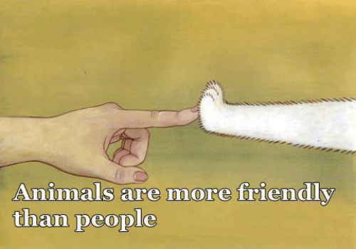 Animals, Memes, and 🤖: Animals are more friendly  than people