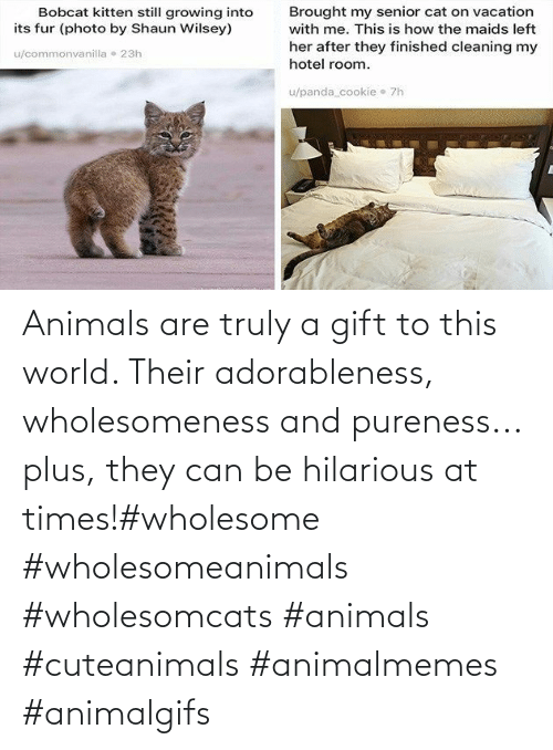 Plus: Animals are truly a gift to this world. Their adorableness, wholesomeness and pureness... plus, they can be hilarious at times!#wholesome #wholesomeanimals #wholesomcats #animals #cuteanimals #animalmemes #animalgifs