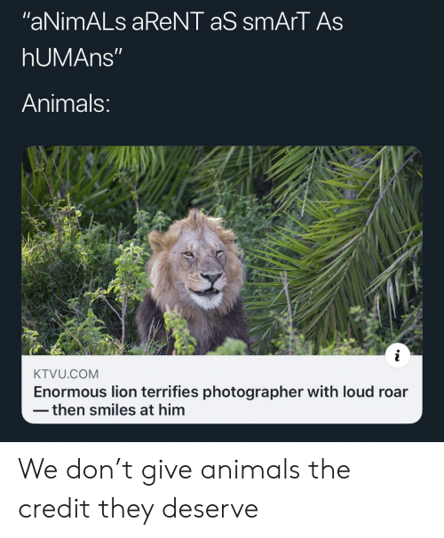 "enormous: ""aNimALs aReNT aS smArT As  hUMAns""  Animals:  KTVU.COM  Enormous lion terrifies photographer with loud roar  then smiles at him We don't give animals the credit they deserve"