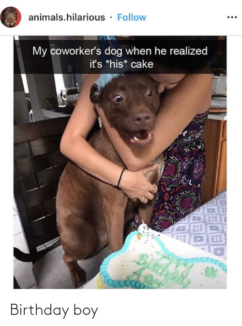 Animals, Birthday, and Cake: animals.hilarious · Follow  ...  My coworker's dog when he realized  it's *his* cake Birthday boy