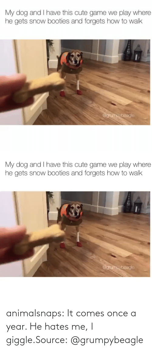Comes: animalsnaps:  It comes once a year. He hates me, I giggle.Source:@grumpybeagle