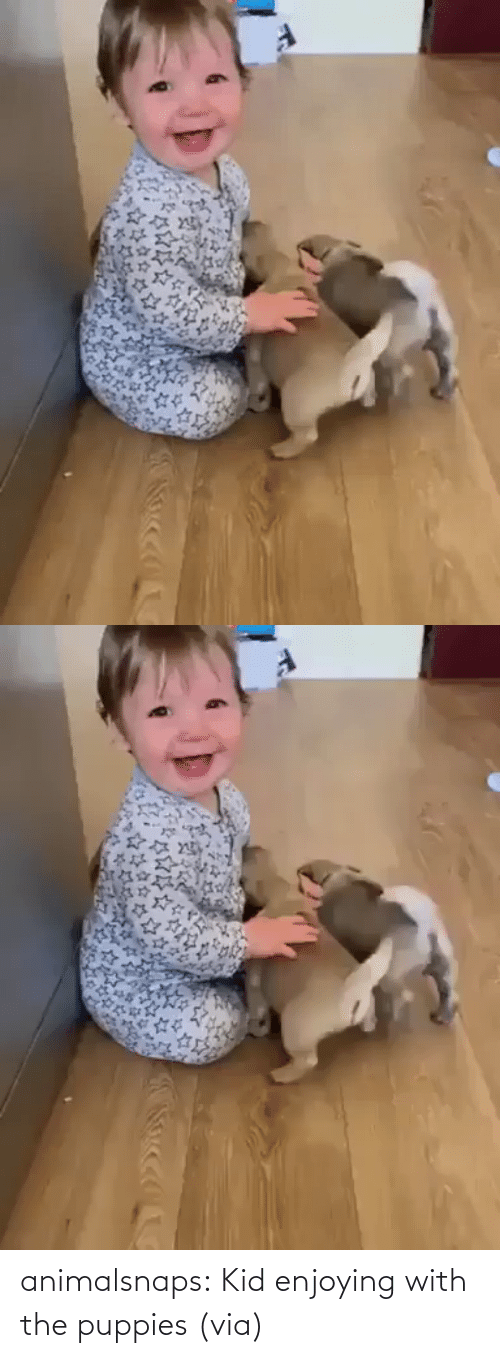 Puppies: animalsnaps:  Kid enjoying with the puppies (via)