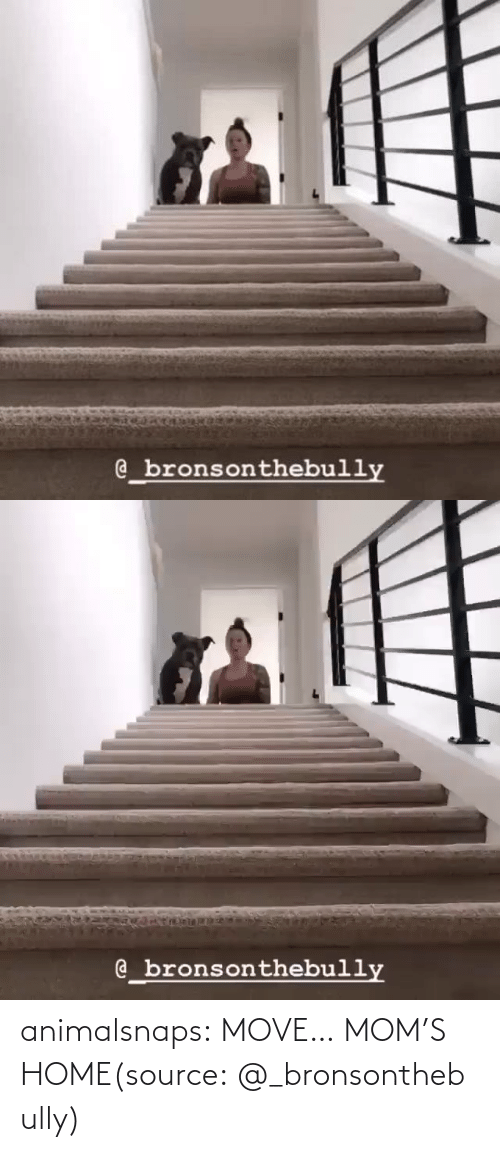 move: animalsnaps:  MOVE… MOM'S HOME(source:@_bronsonthebully)