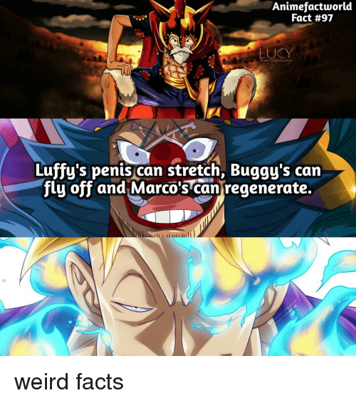 Facts, Gladiator, and Weird: Animefactworld  Fact #97  UCY  The Gladiator  Luffy's penis can stretch, Buggy's can  flu off and Marco's cantregenerate  Iu