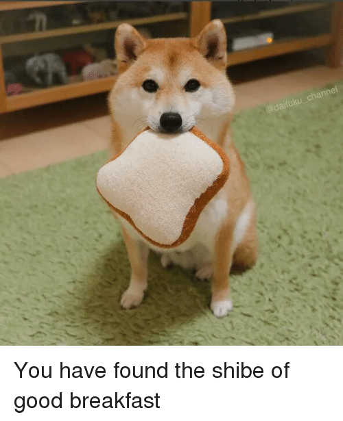 shibe: annei You have found the shibe of good breakfast