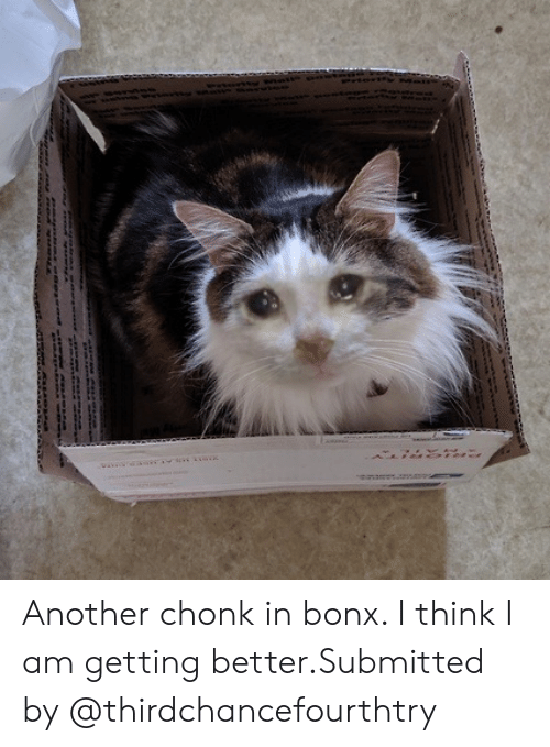 Chonk: Another chonk in bonx. I think I am getting better.Submitted by @thirdchancefourthtry