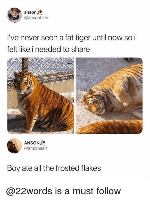 frosted flakes: anson,  @ansontiller  i've never seen a fat tiger until now so i  felt like i needed to share  ANSON,  @ansonsart  Boy ate all the frosted flakes @22words is a must follow