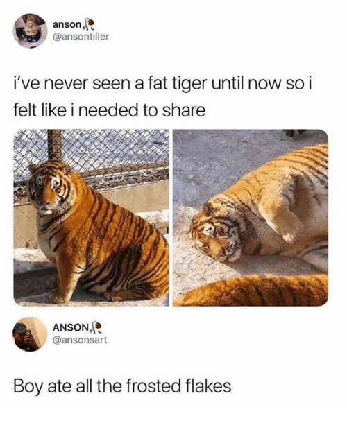 Dank, Tiger, and Fat: anson,  @ansontiller  i've never seen a fat tiger until now so i  felt like i needed to share  ANSON,  @ansonsart  Boy ate all the frosted flakes