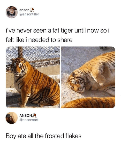 frosted flakes: anson,  @ansontiller  i've never seen a fat tiger until now so i  felt like i needed to share  ANSON  @ansonsart  Boy ate all the frosted flakes