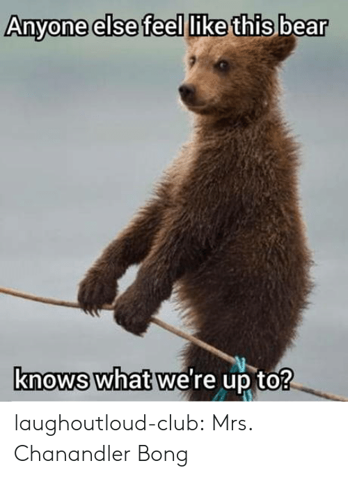 Club, Tumblr, and Bear: Anyone else feel like this bear  knows what we're up to? laughoutloud-club:  Mrs. Chanandler Bong