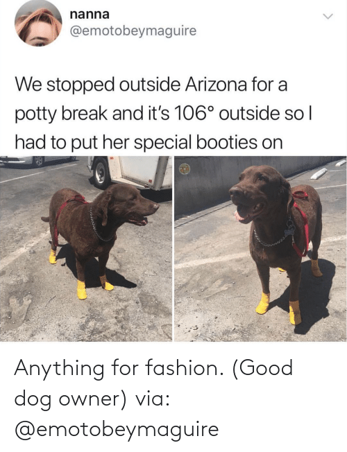 Dog: Anything for fashion. (Good dog owner) via: @emotobeymaguire