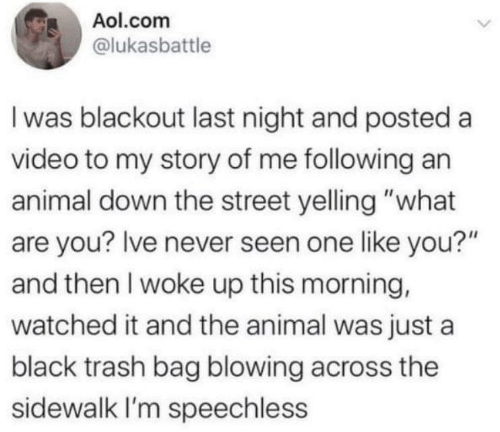 "Video: Aol.com  @lukasbattle  I was blackout last night and posted a  video to my story of me following an  animal down the street yelling ""what  are you? Ive never seen one like you?""  and then I woke up this morning,  watched it and the animal was just a  black trash bag blowing across the  sidewalk I'm speechless"