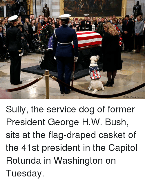 capitol: AP Photo/Patrick Semansky Sully, the service dog of former President George H.W. Bush, sits at the flag-draped casket of the 41st president in the Capitol Rotunda in Washington on Tuesday.