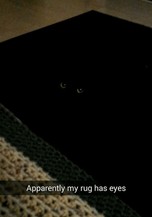 Apparently, Memes, and 🤖: Apparently my rug has eyes