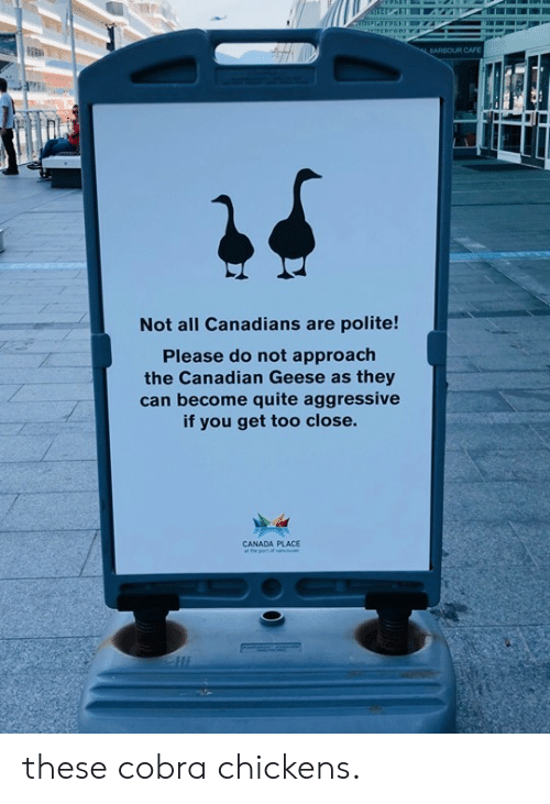 Canadians: ARBOUR CAFE  Not all Canadians are polite!  Please do not approach  the Canadian Geese as they  can become quite aggressive  if you get too close.  CANADA PLACE these cobra chickens.