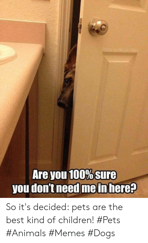 Animals Memes: Are you 100% sure  you don't need me in here? So it's decided: pets are the best kind of children! #Pets #Animals #Memes #Dogs