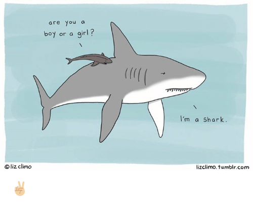 Sharked: are you a  boy or a girl?  I'm a Shark.  Oliz climo  lizclimo. tumblr.com ✌🏼