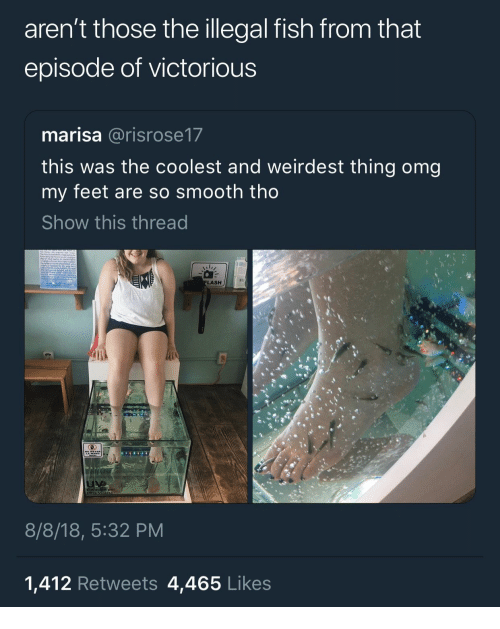 So Smooth: aren't those the illegal fish from that  episode of victorious  marisa @risrose17  this was the coolest and weirdest thing omg  my feet are so smooth tho  Show this thread  LASH  8/8/18, 5:32 PM  1,412 Retweets 4,465 Likes