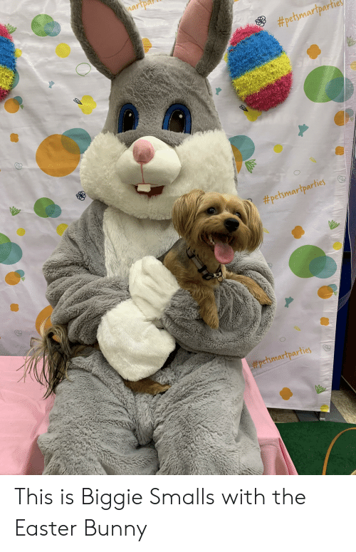 Biggie Smalls, Easter, and Biggie: aripa  #petsmortpartie  2  #petsmartparties  PetSmartparties This is Biggie Smalls with the Easter Bunny