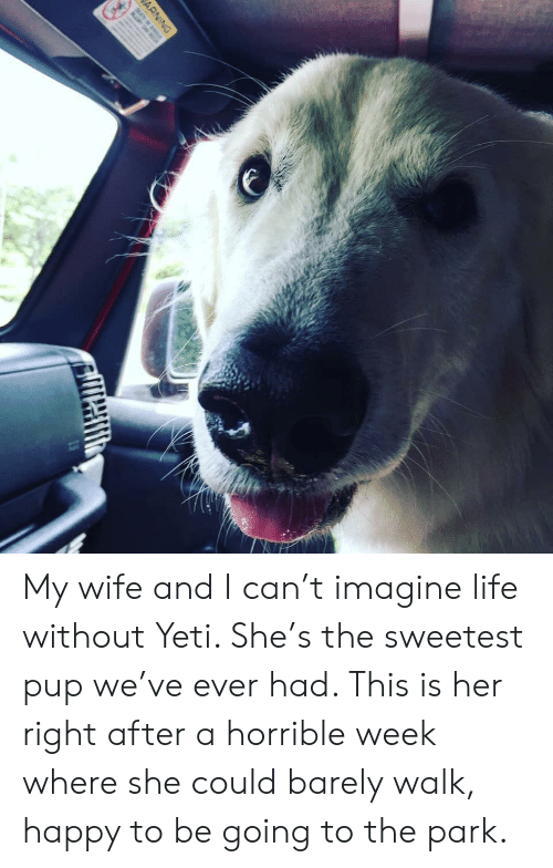 Life, Happy, and Yeti: ARNING My wife and I can't imagine life without Yeti. She's the sweetest pup we've ever had. This is her right after a horrible week where she could barely walk, happy to be going to the park.