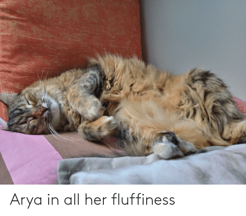Fluffiness: Arya in all her fluffiness