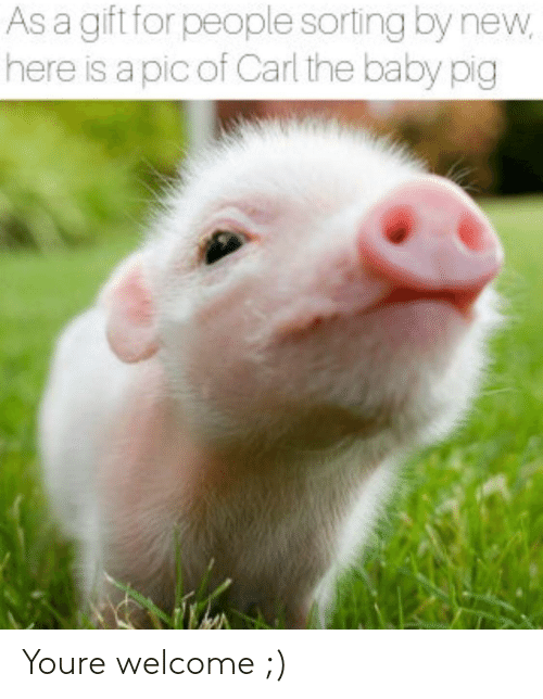 Baby, Pig, and New: As a gift for people sorting by new  here is a pic of Carl the baby pig Youre welcome ;)
