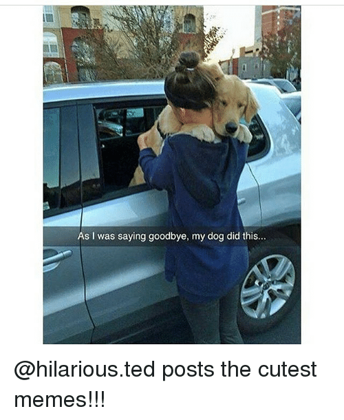 Goodbyee: As I was saying goodbye, my dog did this... @hilarious.ted posts the cutest memes!!!