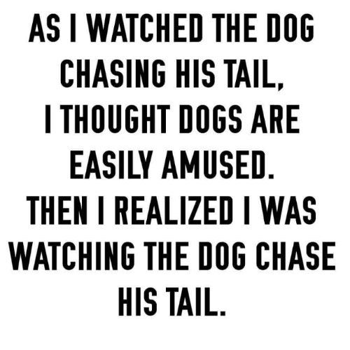 Easily Amused: AS I WATCHED THE DOG  CHASING HIS TAIL,  I THOUGHT DOGS ARE  EASILY AMUSED  THEN I REALIZED I WAS  WATCHING THE DOG CHASE  HIS TAIL