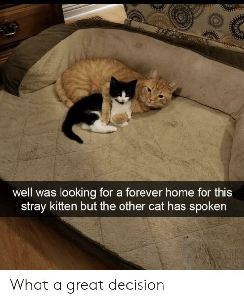 Forever, Home, and Cat: as looking for a forever home for this  stray kitten but the other cat has spoken What a great decision