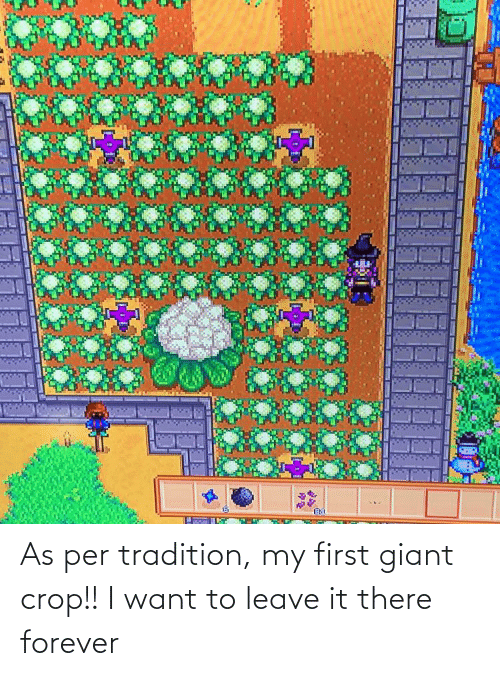 Giant: As per tradition, my first giant crop!! I want to leave it there forever