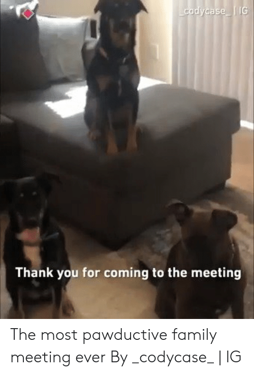 Dank, Family, and Thank You: as  Thank you for coming to the meeting The most pawductive family meeting ever  By _codycase_ | IG