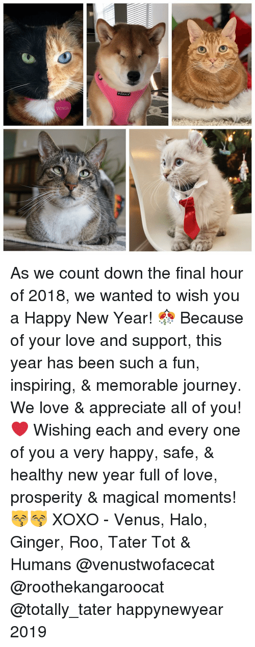 roo: As we count down the final hour of 2018, we wanted to wish you a Happy New Year! 🎊 Because of your love and support, this year has been such a fun, inspiring, & memorable journey. We love & appreciate all of you! ❤️ Wishing each and every one of you a very happy, safe, & healthy new year full of love, prosperity & magical moments! 😽😽 XOXO - Venus, Halo, Ginger, Roo, Tater Tot & Humans @venustwofacecat @roothekangaroocat @totally_tater happynewyear 2019