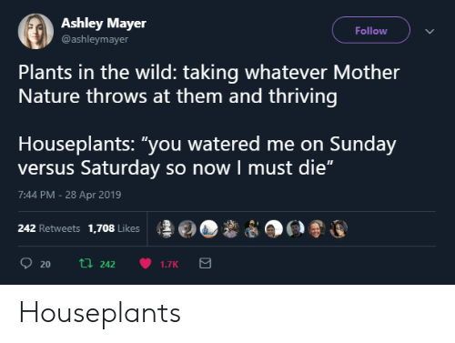 """Watered: Ashley Mayer  @ashleymayer  Follow  Plants in the wild: taking whatever Mother  Nature throws at them and thriving  Houseplants: """"you watered me on Sunday  versus Saturday so now I must die""""  7:44 PM -28 Apr 2019  ş롤@O,ê  po®運  242 Retweets 1,708 Likes Houseplants"""
