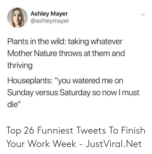 "Work, Nature, and Wild: Ashley Mayer  @ashleymayer  Plants in the wild: taking whatever  Mother Nature throws at them and  thriving  Houseplants: ""you watered me on  Sunday versus Saturday so nowI must  die"" Top 26 Funniest Tweets To Finish Your Work Week - JustViral.Net"