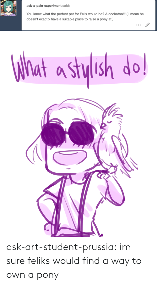 experiment: ask-a-pale-experiment said:  You know what the perfect pet for Felix would be? A cockatoo!!! (I mean he  doesn't exactly have a suitable place to raise a pony at.)   What a stylsh do! ask-art-student-prussia:  im sure feliks would find a way to own a pony