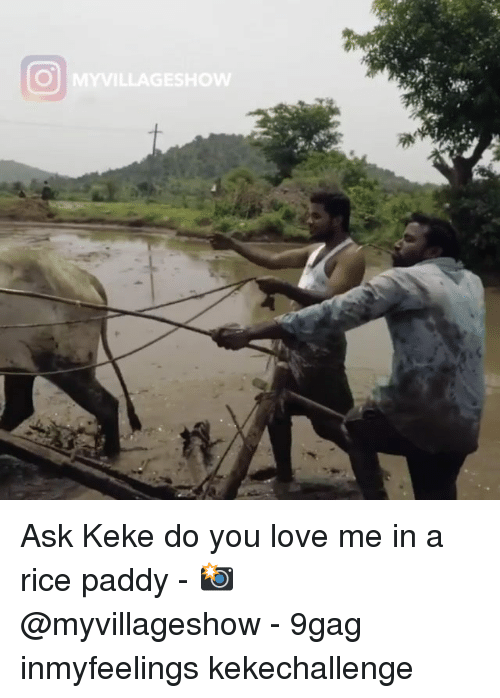 keke: Ask Keke do you love me in a rice paddy - 📸 @myvillageshow - 9gag inmyfeelings kekechallenge